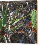 Cactuscomp2 2009 Wood Print