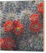 Cacus Blooms Wood Print