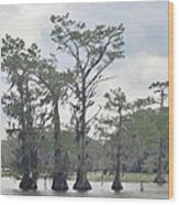 Caddo Lake Cypress Trees Wood Print