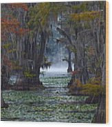 Caddo Lake Morning Wood Print by Snow White