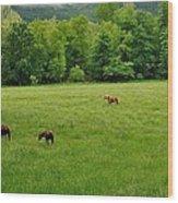 Cades Cove Horses Wood Print