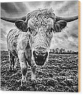 Cadzow White Cow Female Wood Print by John Farnan