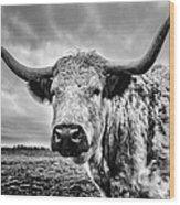Cadzow White Cow Wood Print by John Farnan