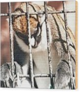 Caged But Strong Wood Print