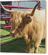 Caged Coo Wood Print