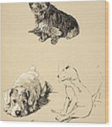 Cairn, Sealyham And Bull Terrier, 1930 Wood Print