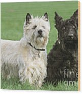 Cairn Terrier And Scottish Terrier Wood Print