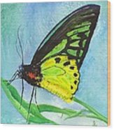 Cairns Birdwing Wood Print