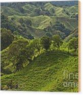 Caizan Hills Wood Print