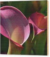 Cala Lilies Light And Shadow Wood Print