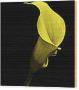 Cala Lilly Vi Wood Print