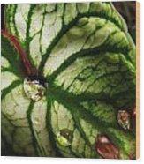 Caladium Leaf After Rain Wood Print