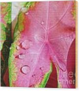 Caladium Leaf Wood Print
