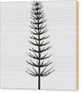 Calamites Prehistoric Tree Wood Print