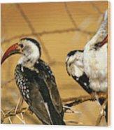 Calao A Bec Rouge Tockus Erythrorhynchus Wood Print