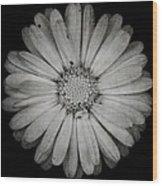 Calendula Flower - Textured Version Wood Print