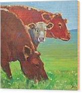 Calf And Cows Painting Wood Print
