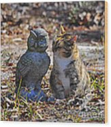 Calico Cat And Obtuse Owl Wood Print by Al Powell Photography USA