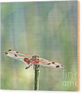 Calico Pennant From Above Wood Print
