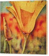 California Poppy Wood Print by Pam Vick