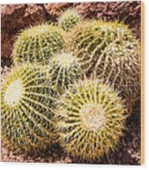 California Barrel Cactus Wood Print