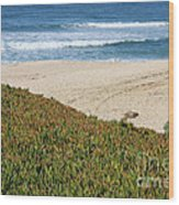 California Beach With Ice Plant Wood Print by Carol Groenen