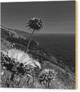 California - Big Sur 002 Wood Print