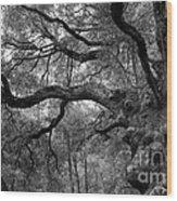 California Black Oak Tree Wood Print