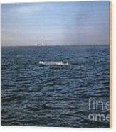 California Blue Whale Wood Print
