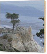California Bonsai Wood Print