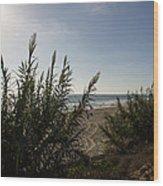 California Carlsbad Beach Hidden View Wood Print