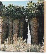 California Coachella Oasis2 Wood Print