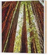California Coastal Redwoods Wood Print