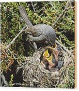 California Gnatcatcher Feeding Young Wood Print