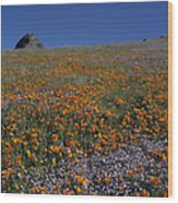 California Gold Poppies And Baby Blue Eyes Wood Print