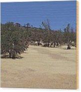 California Grass And Oak Trees Wood Print
