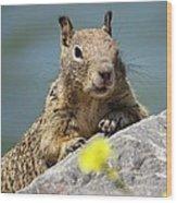 California Ground Squirrel Wood Print