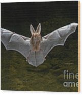 California Leaf-nosed Bat Wood Print
