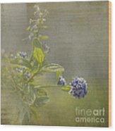 California Lilac Wood Print