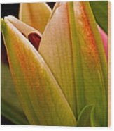 California Lily Wood Print