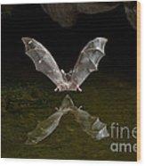 California Long-nosed Bat Flying Away Wood Print