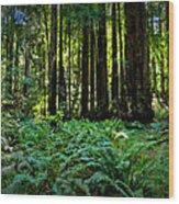 California - Muir Woods 007 Wood Print