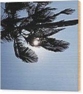 California Palm Wood Print