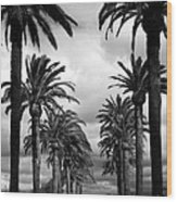 California Palms - Black And White Wood Print