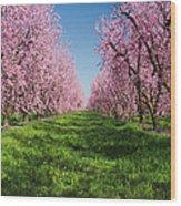 California Peach Tree Orchard  Wood Print