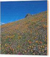 California Poppies Baby Blue Eyes And Owl Clover Wood Print