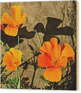 California Poppies - Crisp Shadows From The Desert Sun  Wood Print