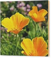 California Poppies In October Wood Print