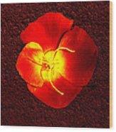 California Poppy By Nadine Johnston Wood Print