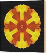 California Poppy Flower Mandala Wood Print by David J Bookbinder